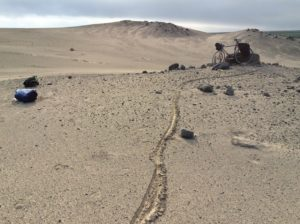 Blew hard here but not as much drifting sand