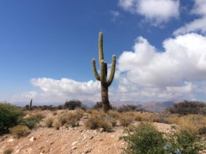 Sajaro-like cactus in the Humanuaca Valley on the way to Jujuy and Salta.